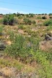 Bartlett Lake Reservoir, Maricopa County, State of Arizona, United States scenic landscape view. Scenic landscape spring view of surrounding area of Bartlett stock images