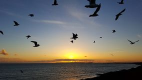 Barton-on-Sea Birds. Birds flying over the sea as the sun sets Stock Photo