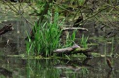 Bartosovice - λίμνη στοκ φωτογραφία με δικαίωμα ελεύθερης χρήσης