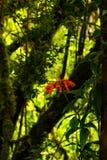 Barva wulkanu park narodowy - Costa Rica Fotografia Royalty Free