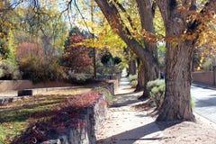 Barwiąca jesieni trawa i liście Zdjęcia Stock
