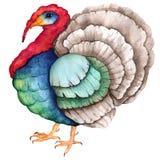Barwiący jaskrawy akwarela indyk dla dziękczynienie projekta ilustracji