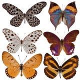 barwiąca motyl kolekcja Obraz Royalty Free