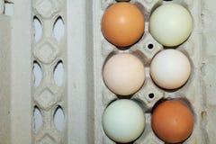 barwiący jajka w kartonie Obraz Stock