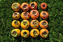 Barwi gradient dojrzała i niedojrzała niedokonana persimmon owoc Fotografia Royalty Free