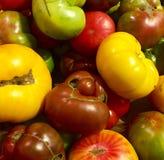 barwi heirloom czerwonego pomidorów kolor żółty Zdjęcia Royalty Free