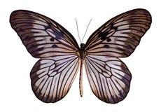 Barwi motyla, odizolowywaj?cego na bia?ym tle z ?cinek ?cie?k? obraz stock