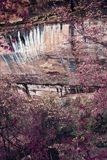barwi park narodowy zion Zdjęcia Stock