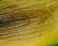 Barwi przemiany na zmarniałym liściu roślina Obrazy Stock