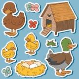 Barwi set śliczni zwierzęta gospodarskie i przedmioty, wektorowa rodzinna kaczka Zdjęcia Royalty Free