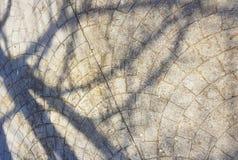 Barwi umieszczać twój tekst retro, cieniu gałąź na betonowym ulicznym tle/ fotografia stock