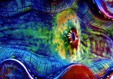 barwi underwater Zdjęcie Royalty Free