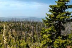 barwiarscy lasy Obraz Stock