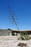 Barwiarski drzewo Zdjęcie Stock