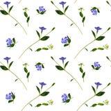 Barwinka i dzikich kwiatów bezszwowy wzór Zdjęcie Stock