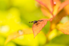 Barwiona komarnica na trawę Fotografia Royalty Free