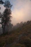 Barwiona mgła na wulkanie Rinjani, Lombok, Indonezja Obrazy Stock