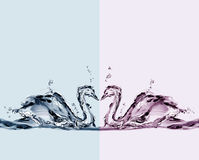barwiona miłości łabędź woda Obraz Stock