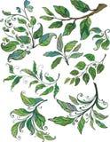 barwione kwieciste gałązki Zdjęcie Stock