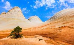 Barwione piaskowiec fala Zdjęcie Stock
