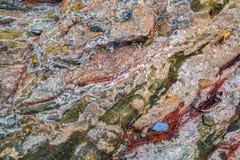 Barwione skały i sosnowe igły Zdjęcie Royalty Free