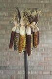 barwionego kukurydzanego rozwidlenia indyjska wielo- smoła Obrazy Stock