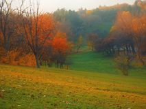 Barwioni drzewa wewnątrz na halnej strefie w Listopadu mgłowym dniu Zdjęcia Royalty Free