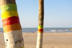 Barwioni drzewka palmowe i plaża w Kolumbia Zdjęcia Royalty Free