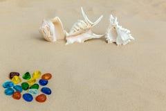 Barwioni kamienie i seashells Fotografia Stock