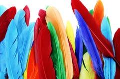 barwioni piórka Obraz Stock
