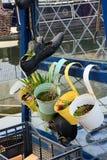 Barwioni roślina właściciele & stary but zdjęcie royalty free