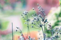 Barwioni wysuszeni kwiaty na zamazanym tle w łące Zdjęcia Royalty Free