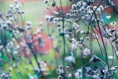 Barwioni wysuszeni kwiaty na zamazanym tle w łące Zdjęcie Royalty Free