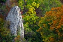 barwiony życie wciąż dryluje drzewa Zdjęcia Royalty Free