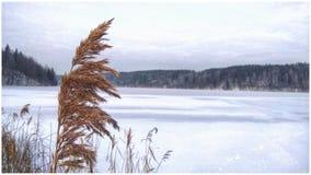Barwiony abstrakt marznący jezioro zdjęcia stock