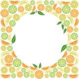 Barwiony cytrus owoc t?o, wektor ilustracji