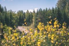 barwiony drzewo opuszcza bujny wzór i światło słoneczne w lesie z gałąź w wczesnej jesieni naturze przy wsią - rocznika stary fil obraz royalty free