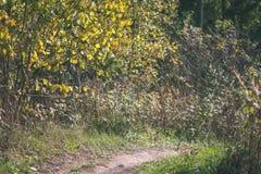 barwiony drzewo opuszcza bujny wzór i światło słoneczne w lesie z gałąź w wczesnej jesieni naturze przy wsią - rocznika stary fil zdjęcia royalty free