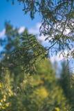 barwiony drzewo opuszcza bujny wzór i światło słoneczne w lesie z gałąź w wczesnej jesieni naturze przy wsią - rocznika stary fil zdjęcie stock
