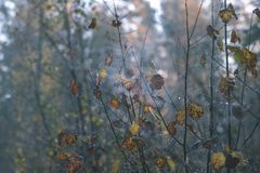 barwiony drzewo opuszcza bujny wzór i światło słoneczne w lesie z gałąź w wczesnej jesieni naturze przy wsią - rocznika stary fil zdjęcie royalty free