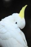 Barwiony Elegancki Papuzi ptak Obrazy Royalty Free