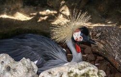 Barwiony Elegancki Papuzi ptak na Zamazanym tle Zdjęcia Stock