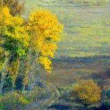 barwiony las Zdjęcie Royalty Free