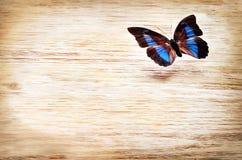 Barwiony motyli latanie nad lekkim tłem Obrazy Royalty Free
