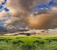 barwiony pole nad niebem Zdjęcie Stock