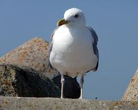 Barwiony ptak - seagull Fotografia Royalty Free