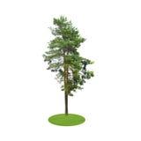 Barwiony sylwetki drzewo Odizolowywający na bielu royalty ilustracja