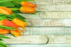 Barwiony tulipan kwitnie na nieociosanym drewnianym stole Obraz Royalty Free