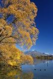 barwy jesieni fotografia royalty free