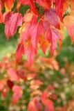 barwy jesieni Zdjęcie Royalty Free